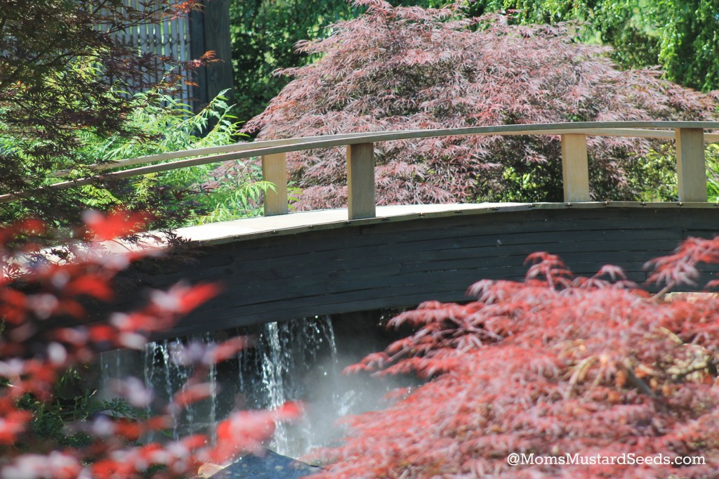 Bridges at the Creation Museum Botanical Gardens via Rebecca MomsMustardSeeds.com