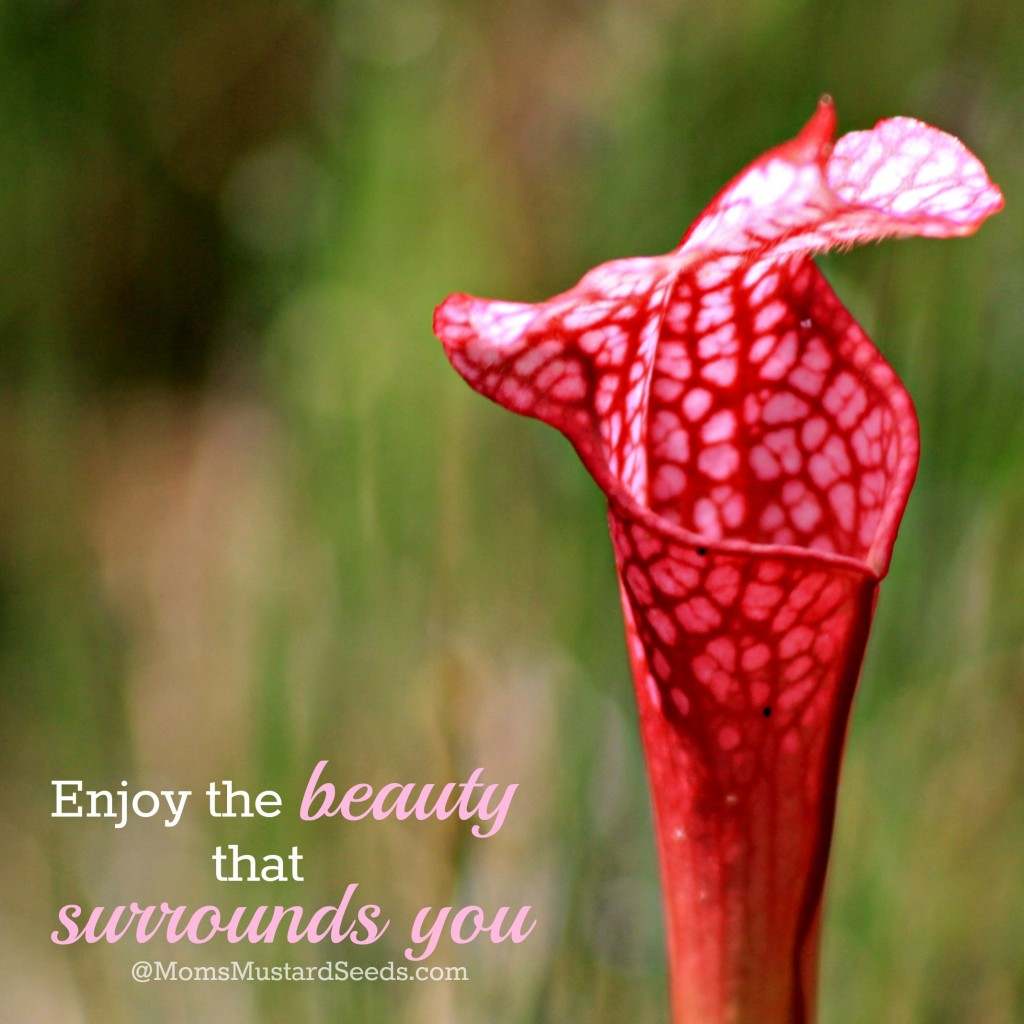 Enjoy the beauty that surrounds you momsmustardseeds.com