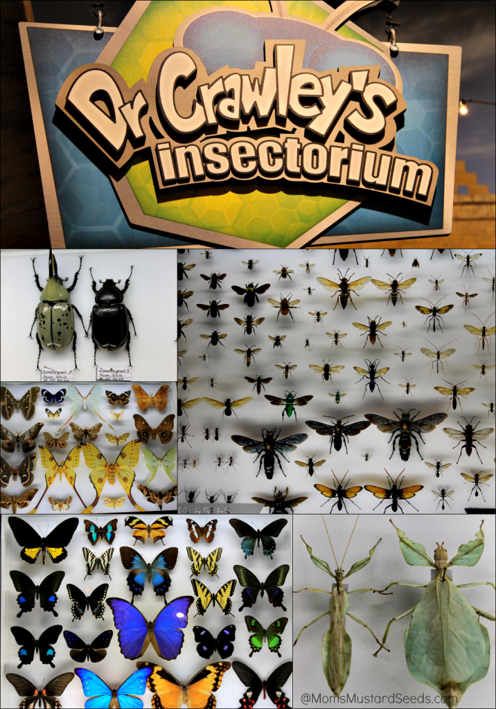 Insectorium at the Creation Museum